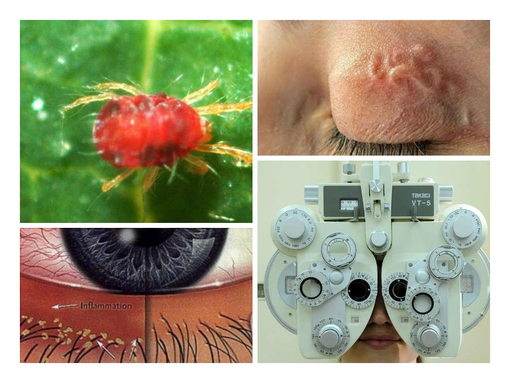 организм паразит не зависит от организма хозяина