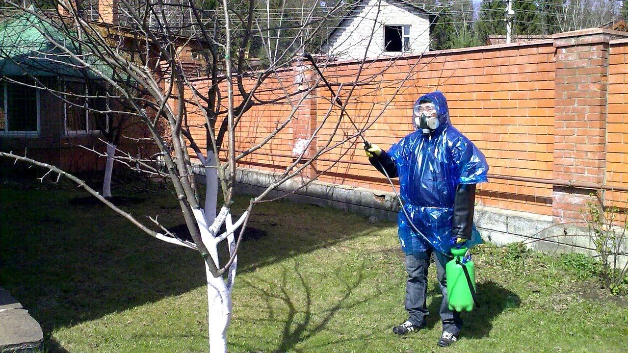 Опрыскивание яблони на голое дерево
