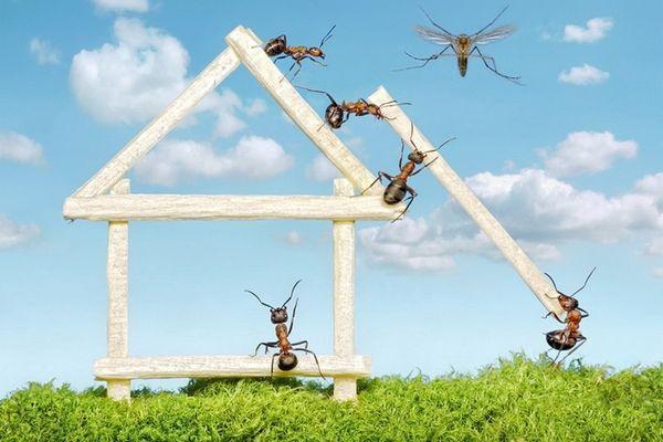 Крылатые муравьи мигрируют