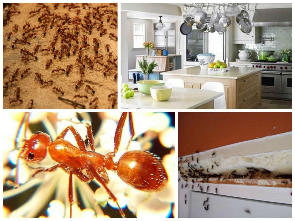 В доме хорошие условия для муравьев