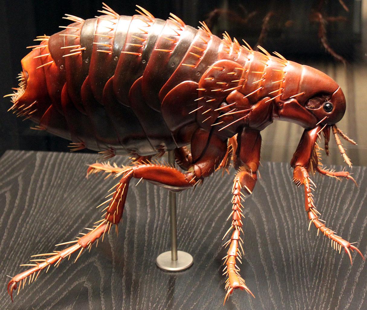 насекомые паразиты человека и животных план конспект
