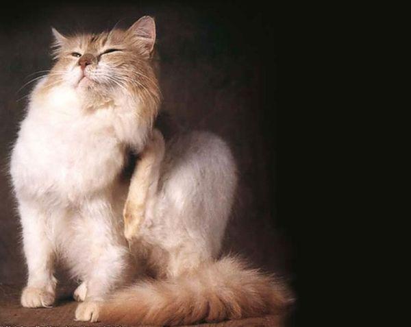 Коты приносят блох с улицы