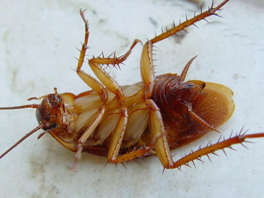 Тараканов убивает мороз
