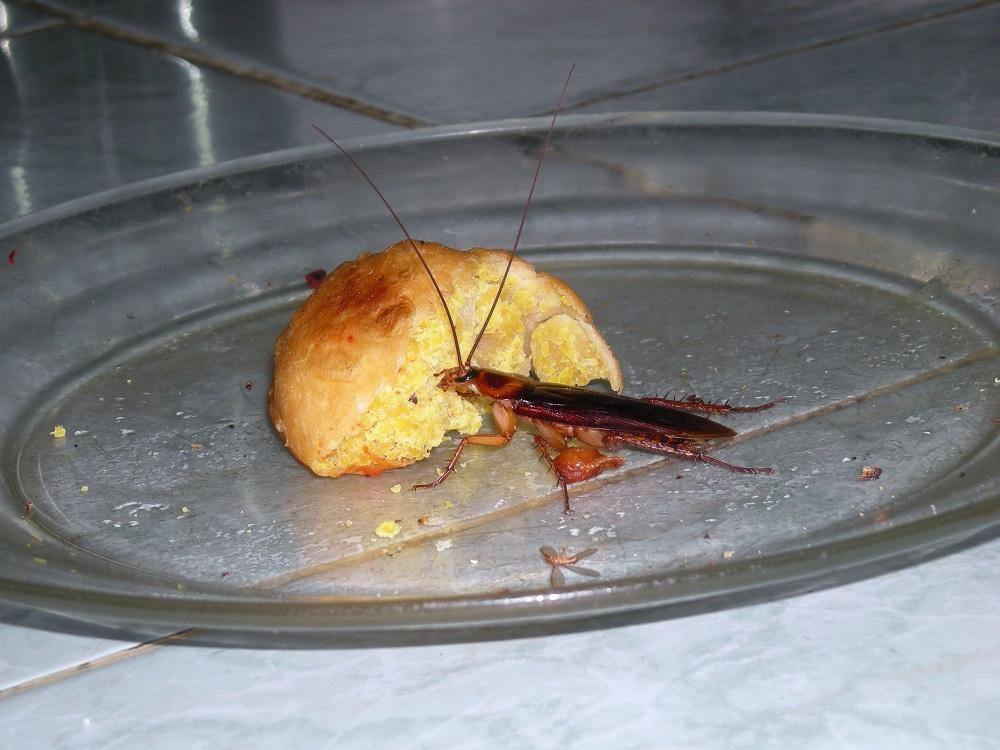 Пищевые ловушки можно сделать своими руками