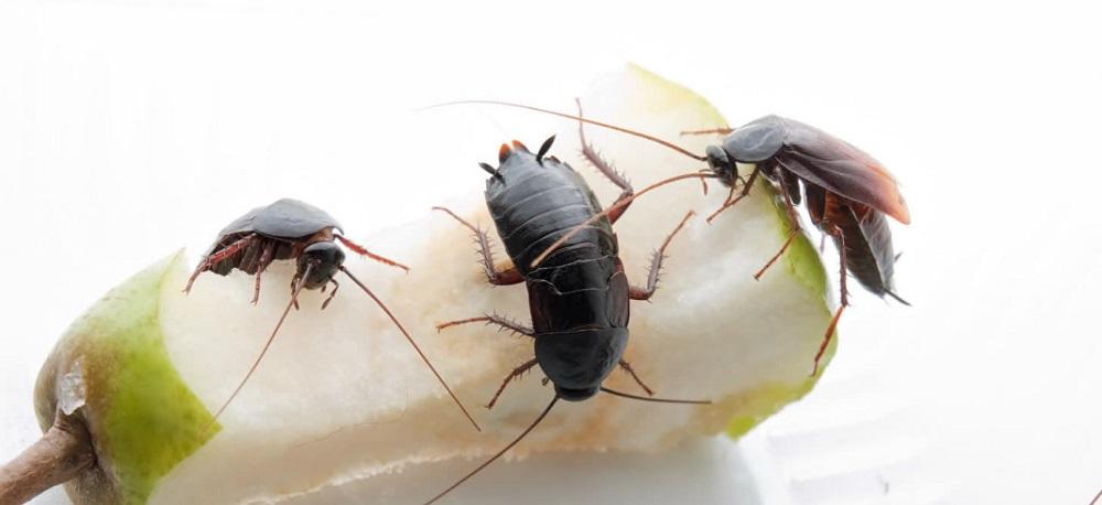 Тараканы любят грязь