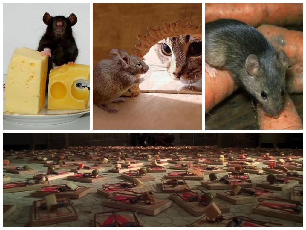 Мыши любят обитать под половым покрытием