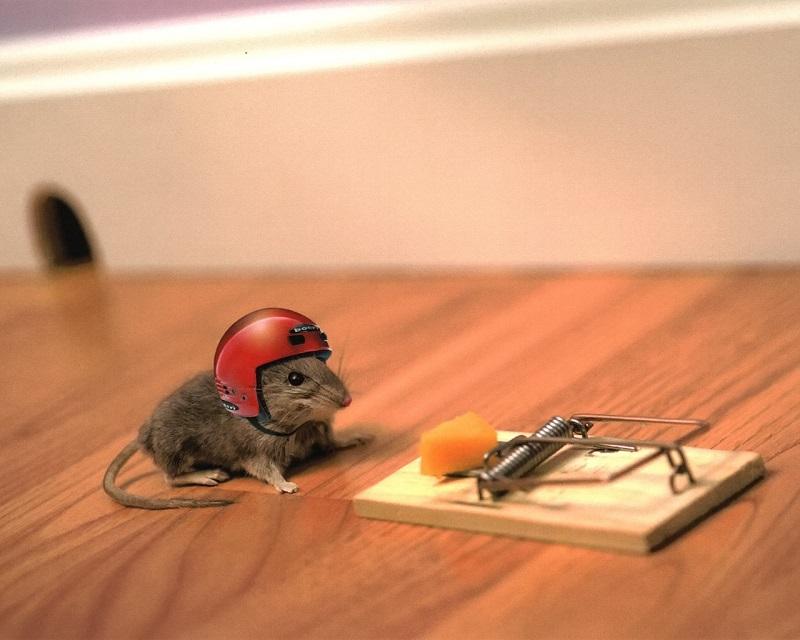 Как узнать есть ли в квартире мыши