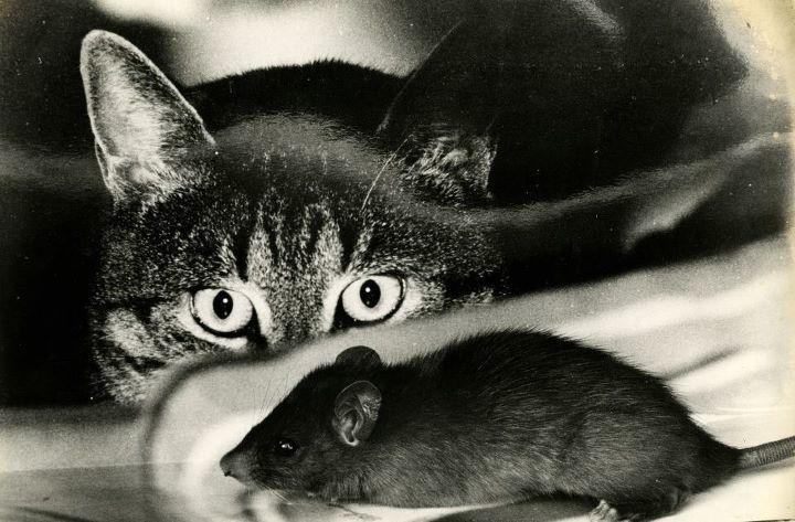В доме стоит держать кота-крысолова