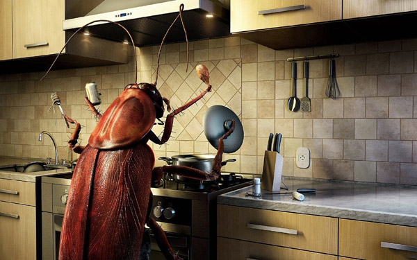 Любимое место тараканов в доме - кухня