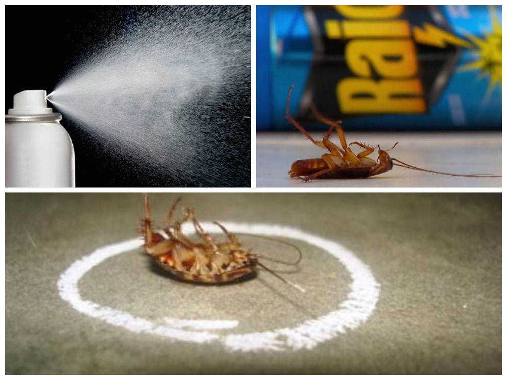 Рейд против тараканов