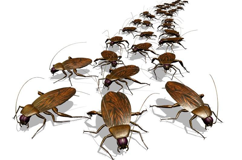 Тараканы убегают
