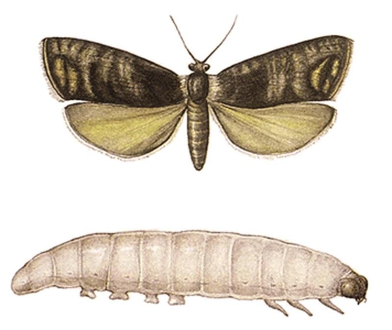 Сначала гусеница - потом бабочка