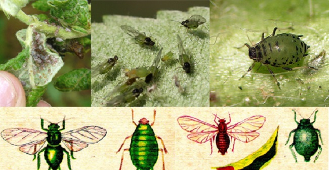 Стадии развития насекомого