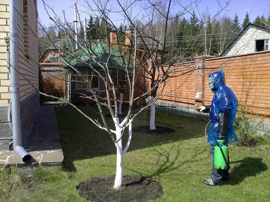 """Опрыскивать от тли правильно еще на """"голое"""" дерево"""