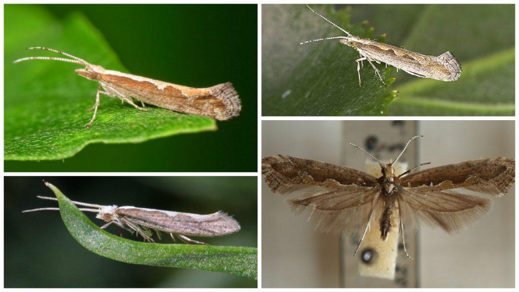 Бабочка питается еще и пыльцой