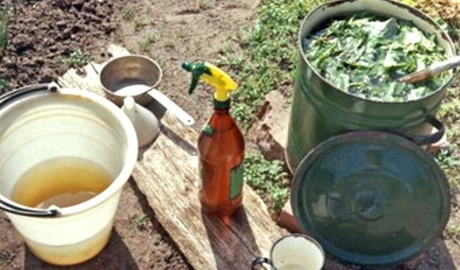Что потребуется для приготовления настоя против огневки на капусте