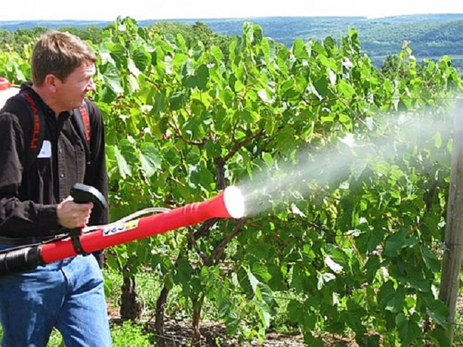 Для обработки лучше приобрести специальное садовое оборудование