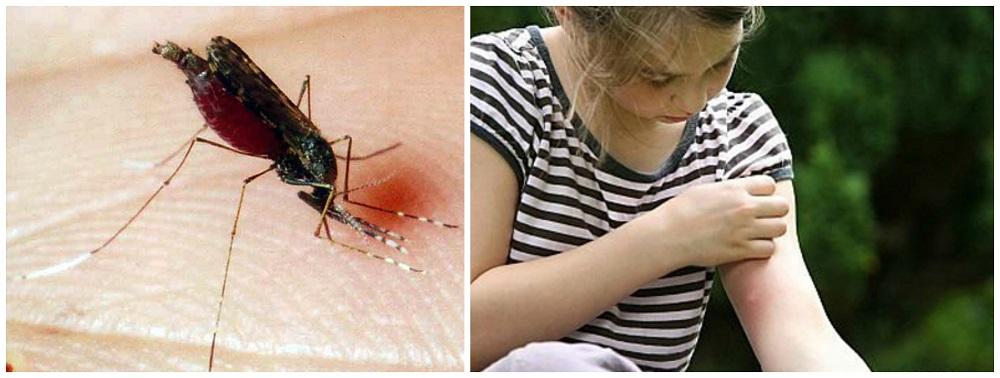 В доме всегда должны быть средства для защиты от комаров