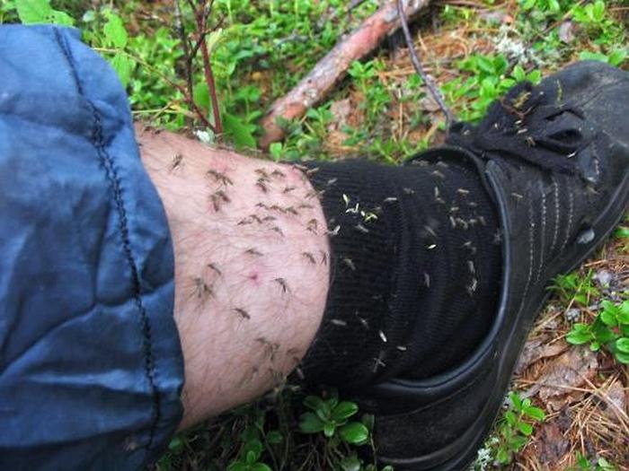 Если ничего не делать, то вред от комаров может привести к значительному ущербу здоровью