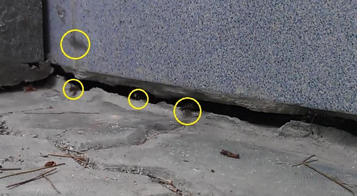 Нужно определить места скопления тараканов и там рассыпать отраву
